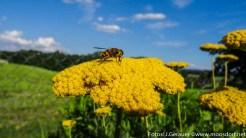 Insekten-Fest (9 von 12)