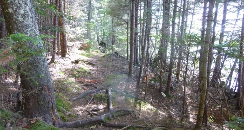 Loon Landing Private Walking Trails