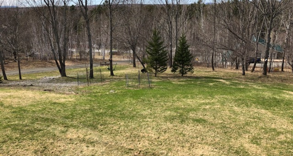 Lawn and walking trails at Lodge at Moosehead Lake