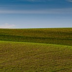 Lines of The Palouse