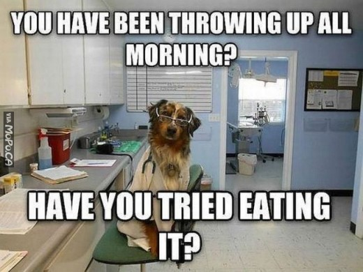 advice-dog