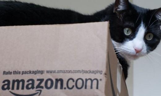 amazon-cat