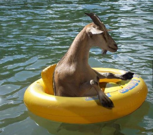 float-goat