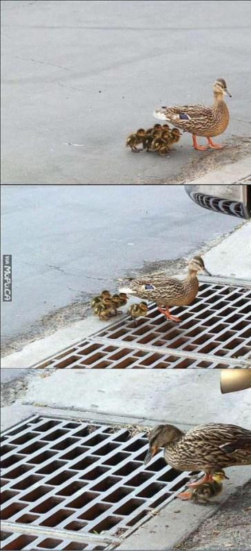 sad-duck