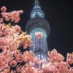 スカイツリーと河津桜で一足早い春の香り