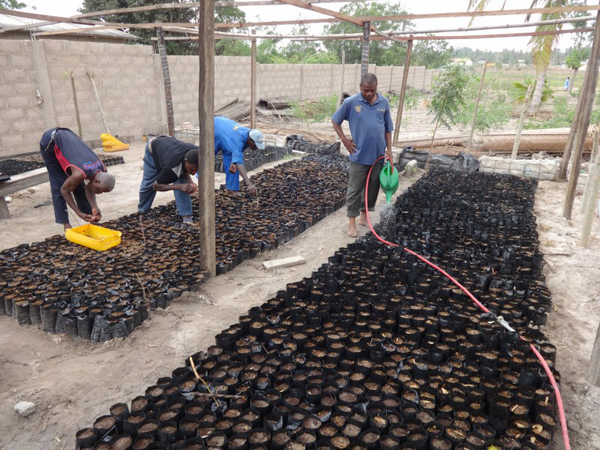 Families replacing ungerminated seeds