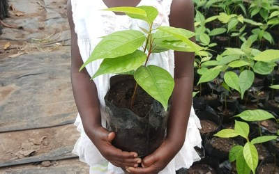 In Ghana children are everywhere and love to play in the trees!