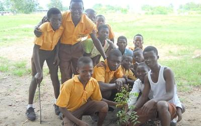 Abokrowa Municipal Assembly Basic School planted 200 trees in November
