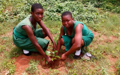 We donated 20,000 trees to 20 schools for Agroforestry training