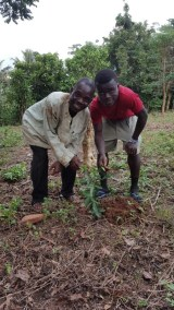 MAXWELL AWUKU AND SOON WITH THIER PLANTED MAHOGANY
