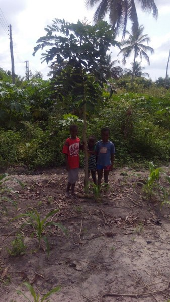 mensah-children-with-high-income-generating-trees