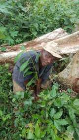 MR. SULEMAN AND HIS PLANTED MAHOGANY TREE