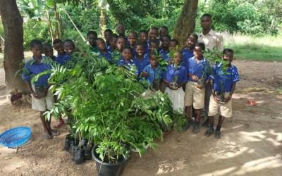 School Tree Planting Program