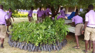 WETA STUDENTS PACKING THIER SEEDLINGS FROM A CAR