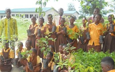 Okoma Municipal Assembly Basic School Has Planted 1000 Trees
