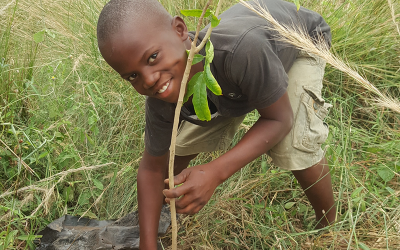 Father and Son Plant 200 Mahogany Trees in Tema Accra
