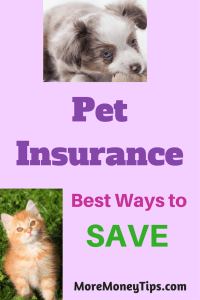 Pet Insurance – Best Ways to Save