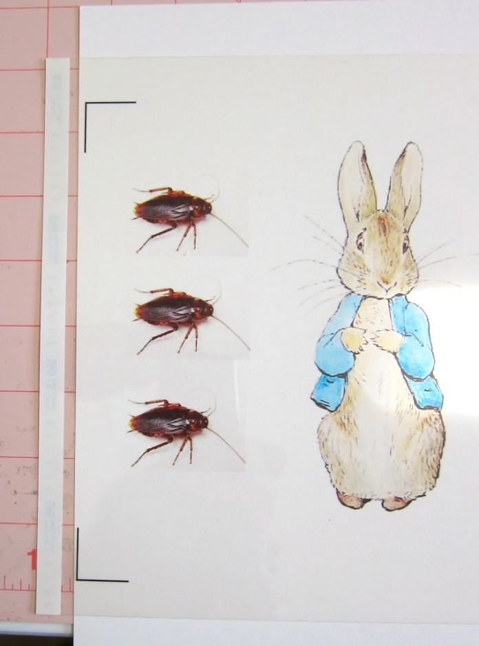 Printed roaches for prank