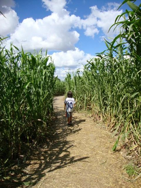 giant corn maze in central texas