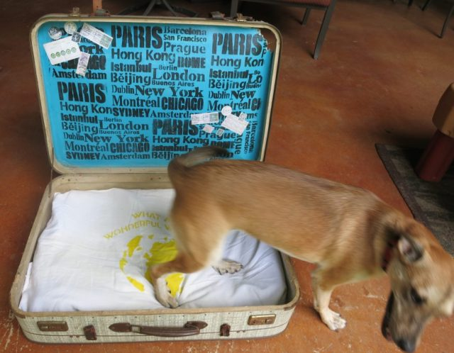 This stenciled pet bed is so easy to make on your own!