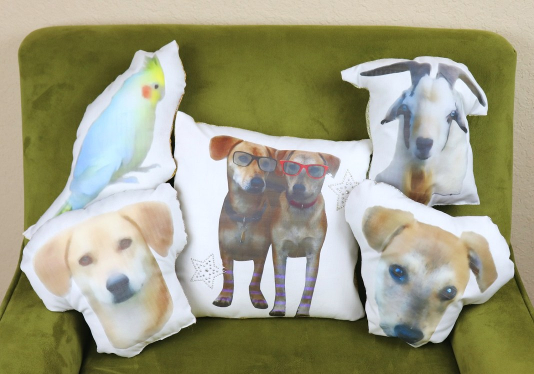 Turn your pet into a pillow