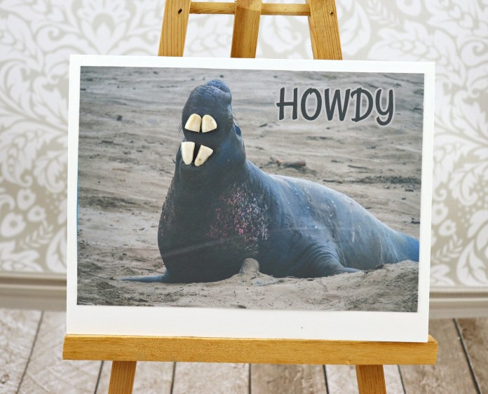 sea lion with teeth card DIY