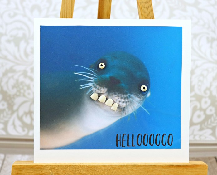 seal with big eyes and teeth DIY card