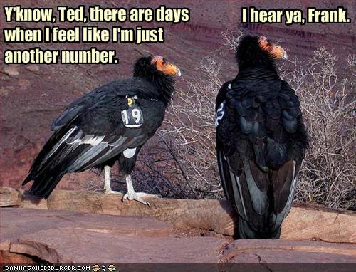 numbered buzzards