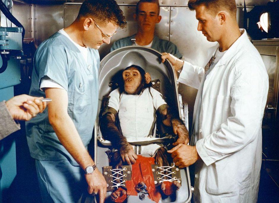 space monkey ham