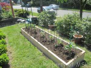 garden 004
