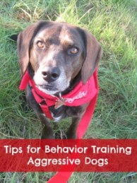 tips to train an aggressive dog