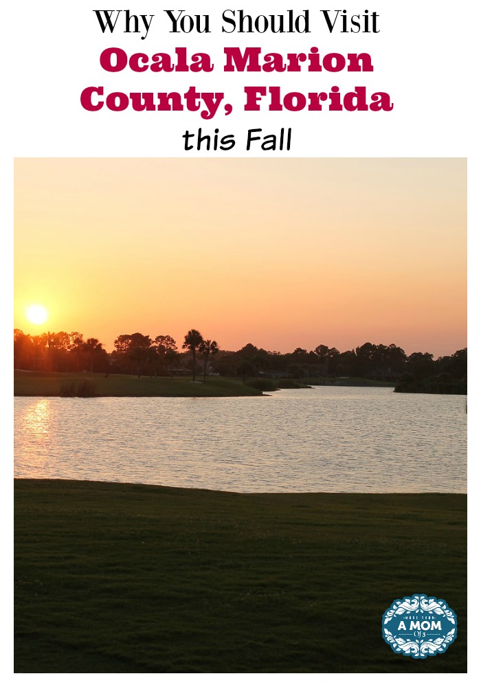 Why You Should Visit Ocala Marion County, Florida this Fall