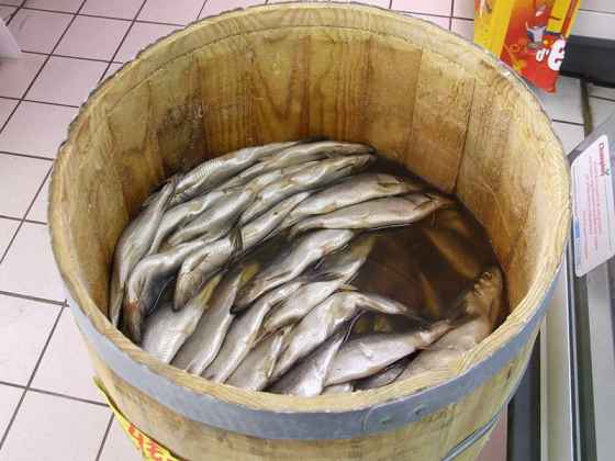 Herring at the market