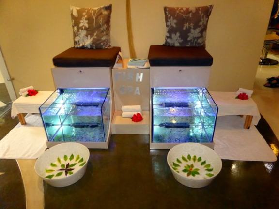 The fish pedicure stations