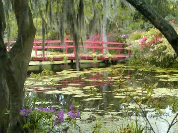 Bridge at Magnolia Plantation (Credit: Suzanne Fluhr)