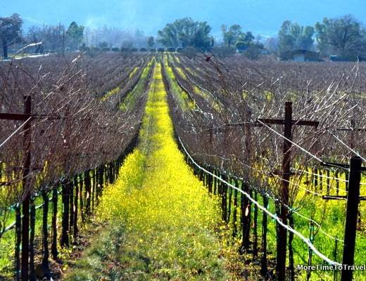 Smack in the middle of Wine Country