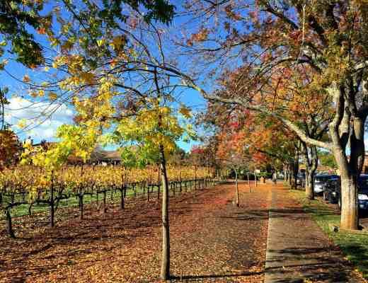 Vineyards on Washington Street