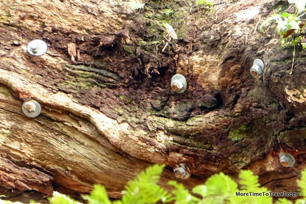 Hardware on the Tree