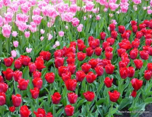 Tulip Time Flowers at Keukenhof Gardens