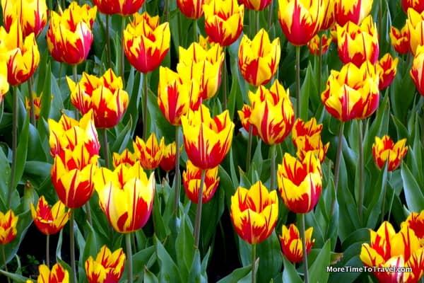Tulip Time in the Netherlands at Keukenhof Gardens