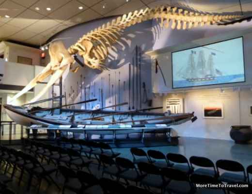 Huge sperm whale skeleton that dominates the main hall in the museum