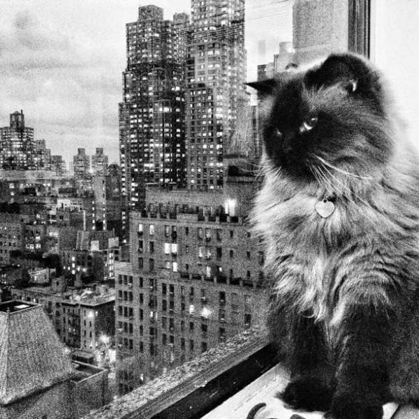 Java taking one last look at New York City