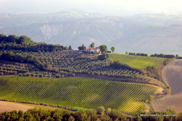 Vineyard and olive trees in Umbrian countryside