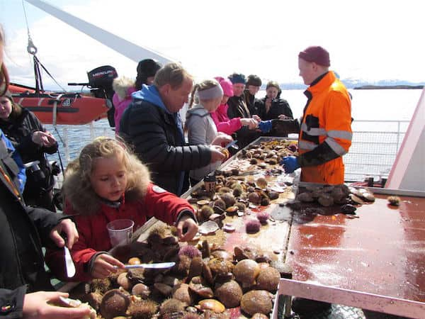 Fresh from the sea: Scallops and urchins
