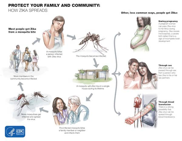 How Zika Spreads (CDC graphic)