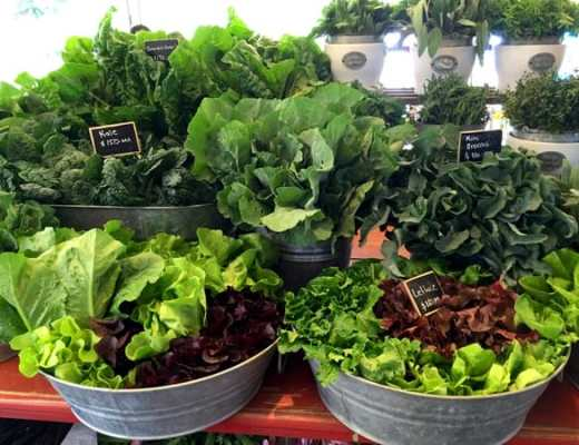 Freshly-picked greens at Flora Farm in Los Cabos (Photo credit: Jerome Levine)