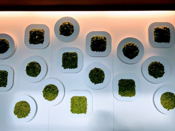 A living wall in the lobby of 8 Piu Hotel