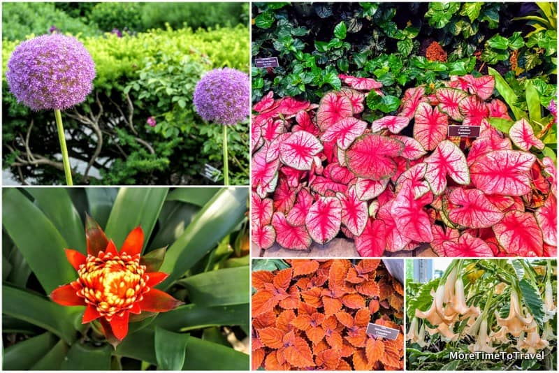 Some of the flowers and plants on display at the NYBG