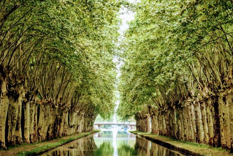 Barge Cruise through Alsace & Lorraine: Avenue of trees along the canal, one of our favorite travel experiences