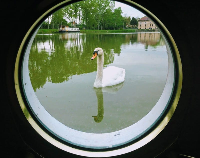 What To Pack For a Barge Cruise: Waterlife on a canal in Maconge, France